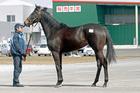 2012年産 父 キンシャサノキセキ×母 ブロードアピール(牝)