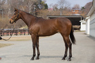2014年産 父shackleford×母reve Enchante(牝) Reve Enchanteの14