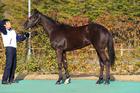 2015年産 父ディープインパクト×母バイコースタル(牝) ラペールノアール